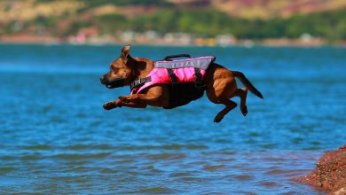 best dog life jacket
