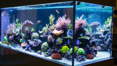 10 Best Aquarium Heaters (September 2019 Reviews)
