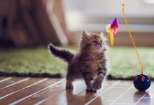 Best Interactive Cat Toys