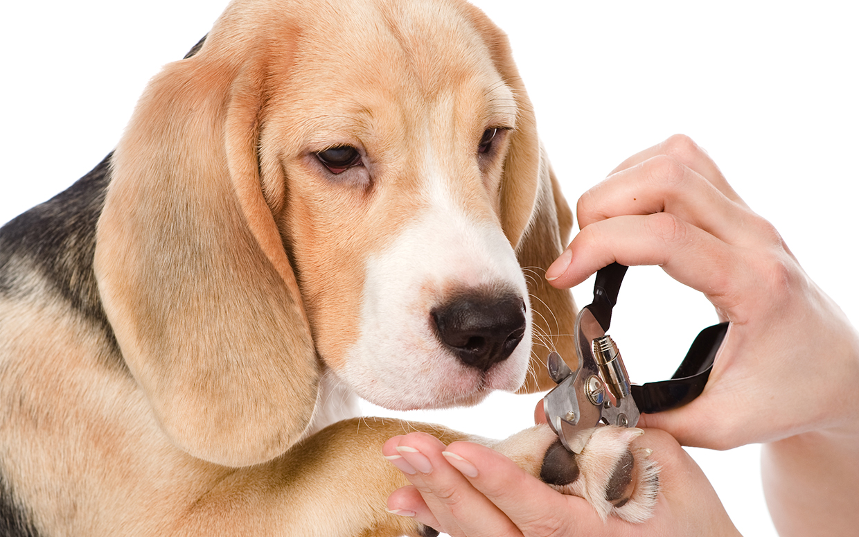 10 Best Dog Nail Clippers in 2019