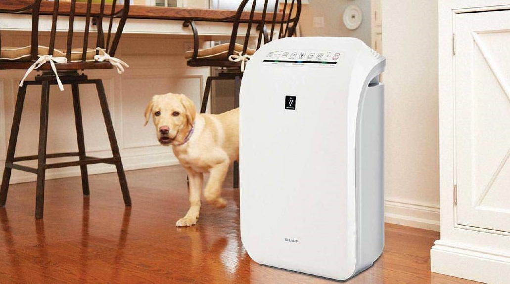 Best Air Purifier For Allergies 2019 10 Best Air Purifiers For Pets in 2019   Pets Ami