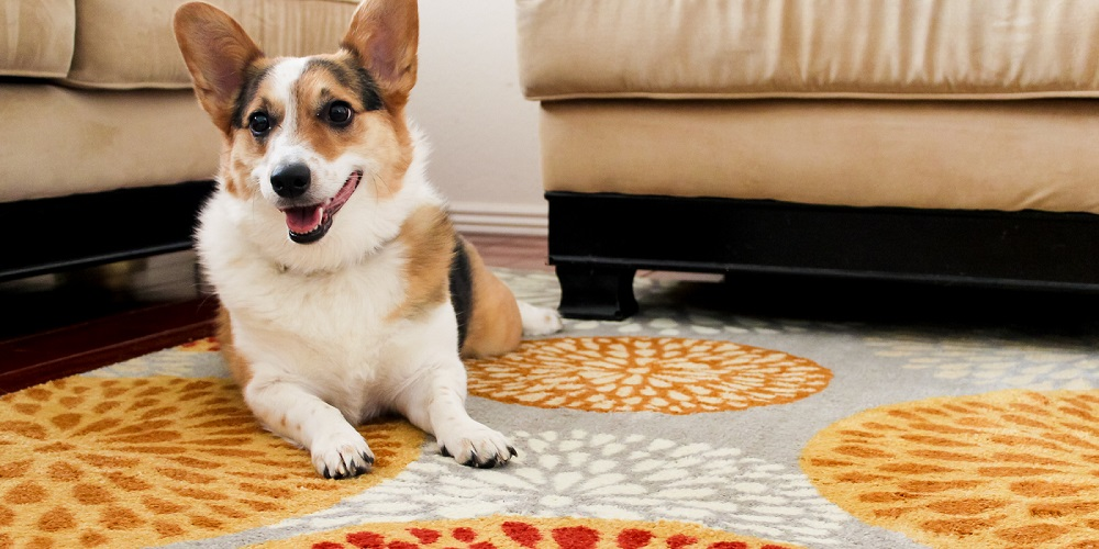 10 Best Carpet Cleaners For Old Pet Urine In 2019 Pets Ami