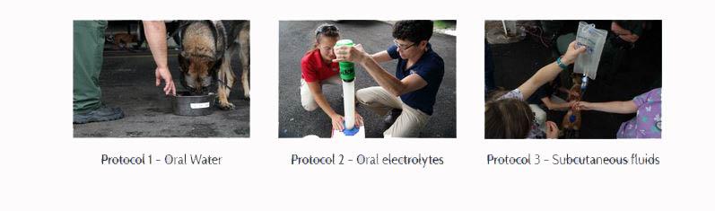 Hydration Strategies